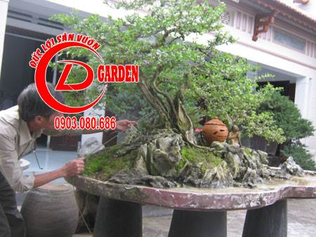 cây ba chia 1