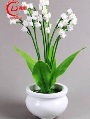 Cây Hoa Linh Lan