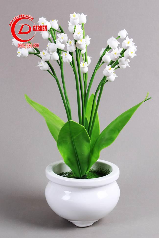 Cây Hoa Linh Lan 3