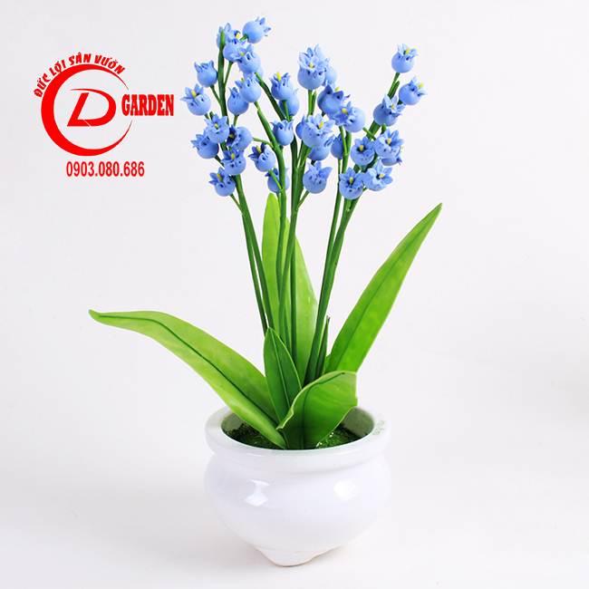 Cây Hoa Linh Lan 5