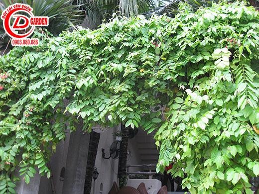 Công Trình Quán Cafe Tino 4