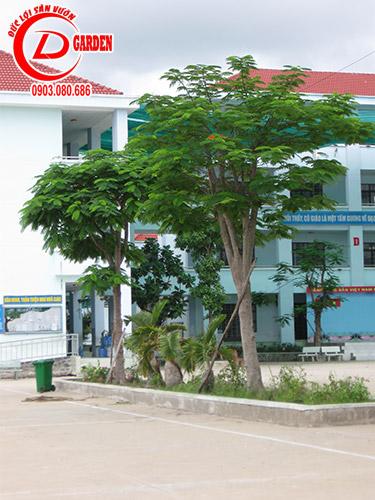 Công Trình Trường Tiểu Học Tân Kiên 24