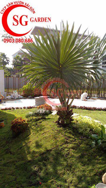 Công trình thi công sân vườn anh Sơn quận 9 15