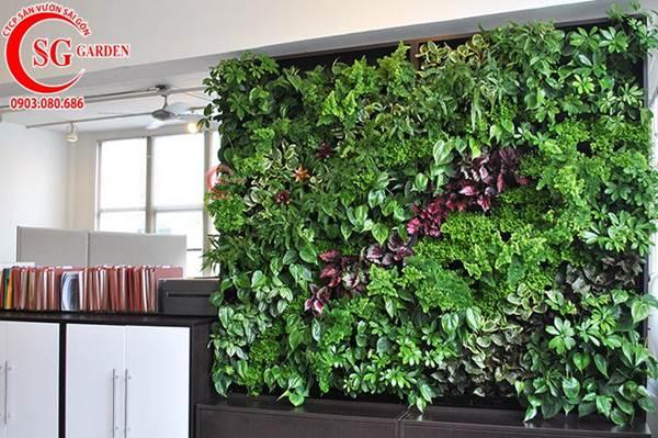 Thiết kế thi công vườn tường 1