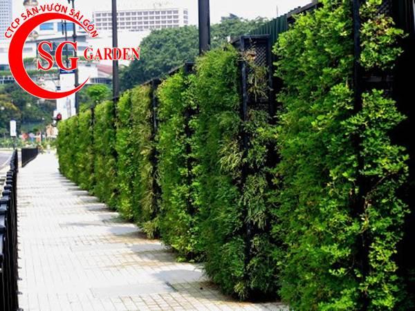 Thiết kế thi công vườn tường 26