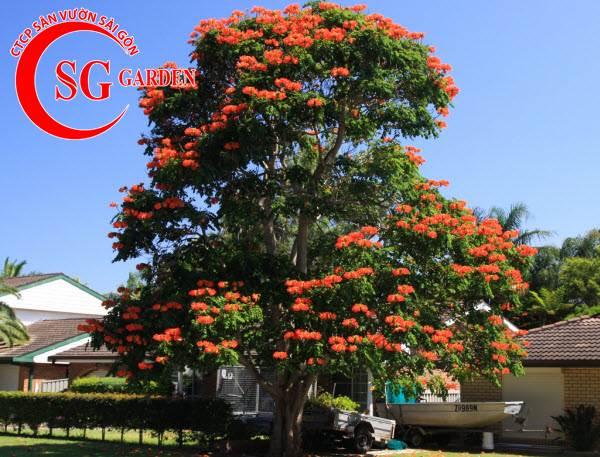 cây sò đo cam 6