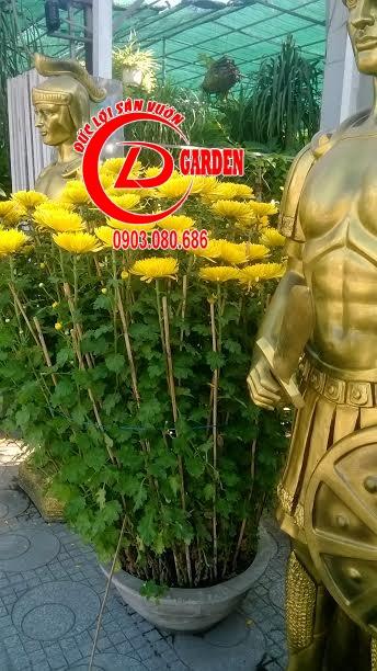 Cúc Pha Lê Vàng 2