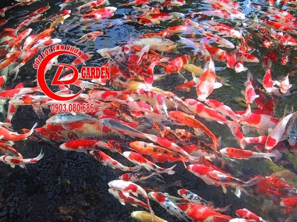 Thiết Kế Thi Công Và Cải Tạo Hồ Cá Koi 1