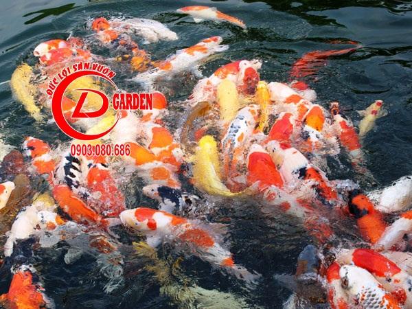 Thiết Kế Thi Công Và Cải Tạo Hồ Cá Koi 2