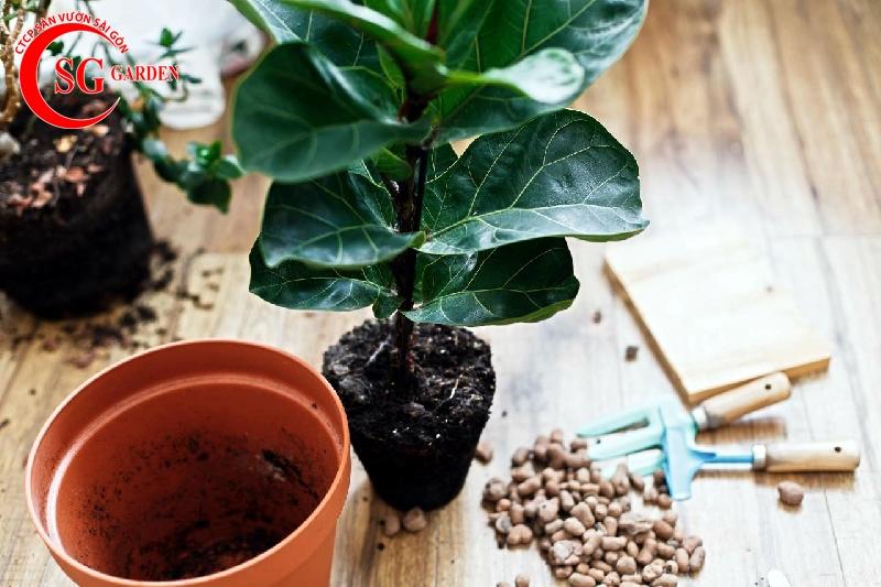 cách chăm sóc cây trồng trong chậu 12