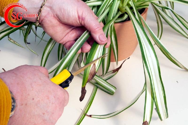 cách chăm sóc cây trồng trong chậu 10