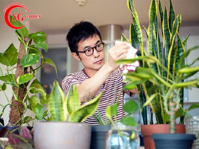 cách chăm sóc cây trồng trong chậu 11
