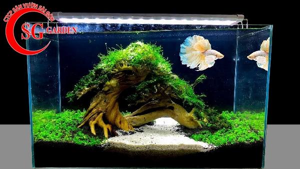 các loại cây thủy sinh dễ tìm ngoài tự nhiên 2