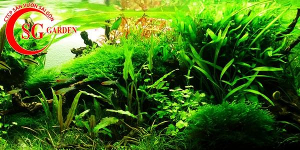 các loại cây thủy sinh dễ tìm ngoài tự nhiên 11