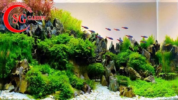 các loại cây thủy sinh dễ tìm ngoài tự nhiên 3
