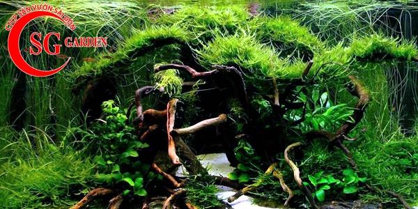 các loại cây thủy sinh dễ tìm ngoài tự nhiên 4