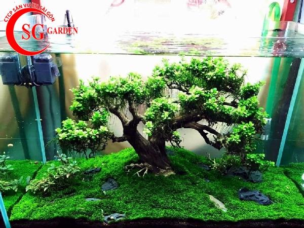các loại cây thủy sinh dễ tìm ngoài tự nhiên 6
