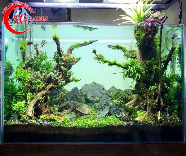 các loại cây thủy sinh dễ tìm ngoài tự nhiên 8