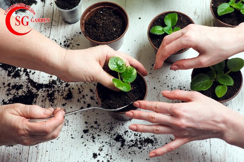 cách chăm sóc cây trồng trong chậu 7