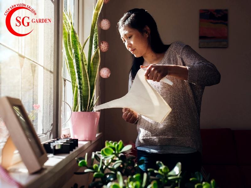 cách chăm sóc cây trồng trong chậu 5