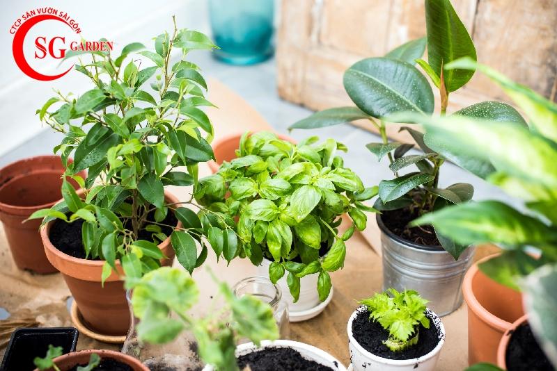 cách chăm sóc cây trồng trong chậu 6