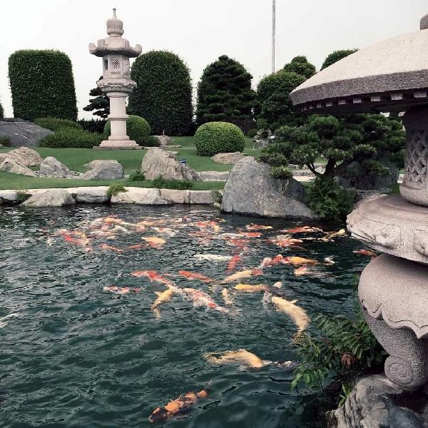 công viên cá chép nhật rin rin 2