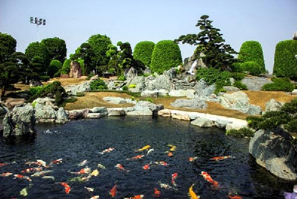 công viên cá chép nhật rin rin 6