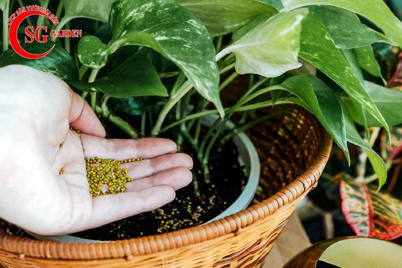 cách chăm sóc cây trồng trong chậu 9