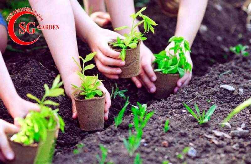cách trộn đất trồng cây cảnh 3
