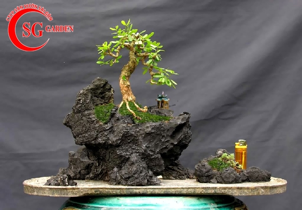tiểu cảnh bonsai 1