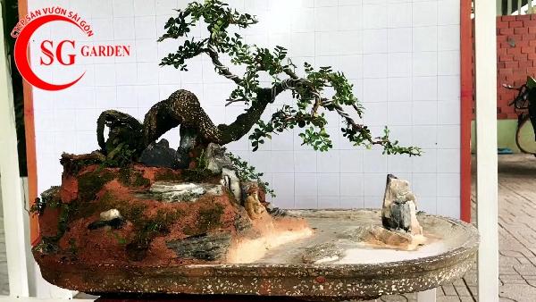 tiểu cảnh bonsai 2