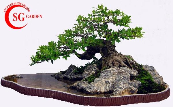 tiểu cảnh bonsai 3