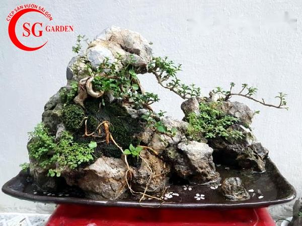 tiểu cảnh bonsai 4