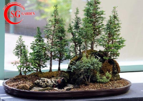 tiểu cảnh bonsai 5