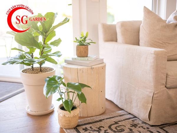 cây trồng trong nhà 2