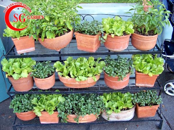vườn rau nhà phố 1