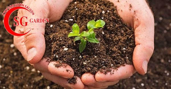 cung cấp phân sạch trồng cây 10