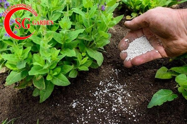cung cấp phân sạch trồng cây 6