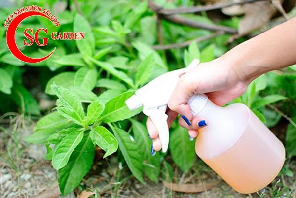 cung cấp phân sạch trồng cây 7