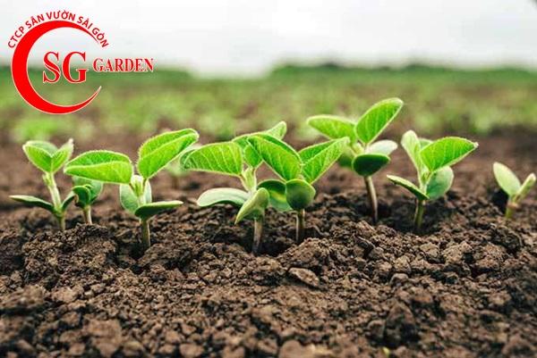 cung cấp phân sạch trồng cây 9