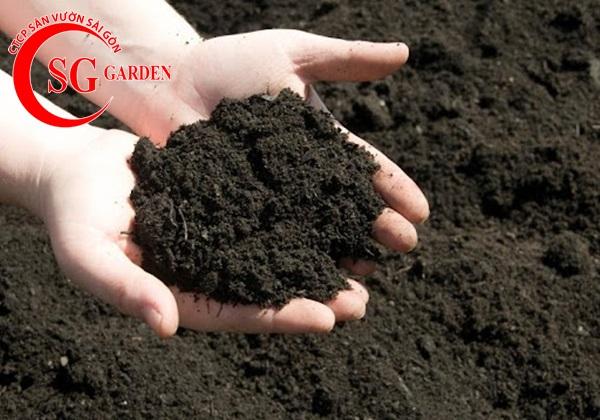 đất sạch trồng rau 1