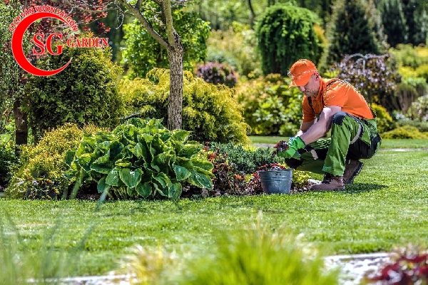 dịch vụ bão dưỡng và chăm sóc sân vườn 1