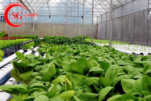 dịch vụ chăm sóc vườn rau 6