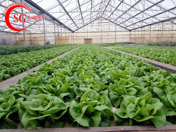dịch vụ chăm sóc vườn rau 4