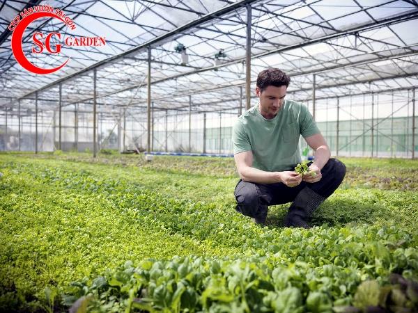 dịch vụ chăm sóc vườn rau 5