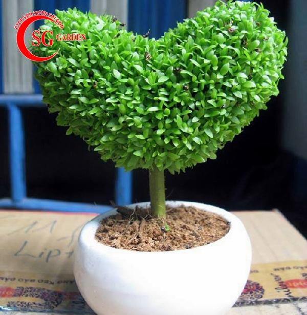 cây may mắn 9