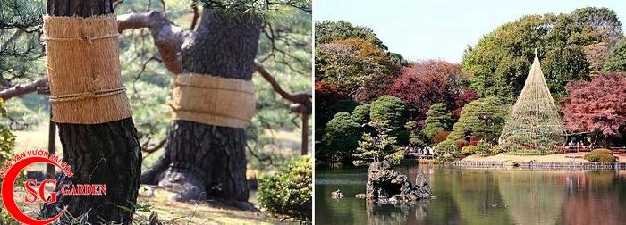 tiểu cảnh Nhật 20