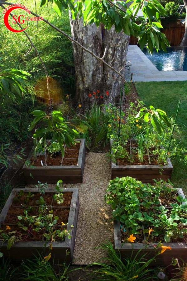 thiết kế vườn rau 10
