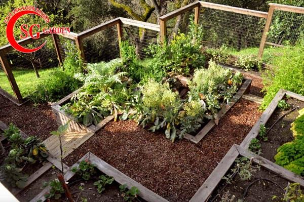 thiết kế vườn rau 11