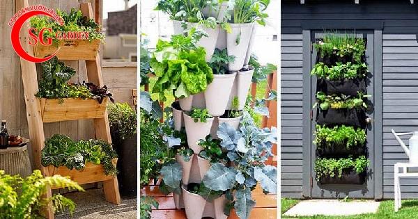 vườn rau ban công 1